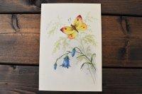 チェコ・ヴィンテージポストカード/未使用/蝶と花